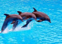 Dolphin Therapy in Side